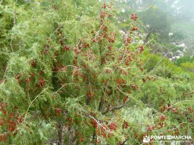Axarquía- Sierras de Tejeda, Almijara y Alhama; rutas de senderismo por españa; naturaleza viajes